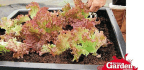 Product Reviews Self-watering Planters