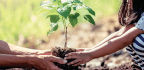 Planting A Tree Of Hope