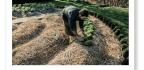 Permacultura La Agricultura Permanente