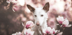 Dog Photographer Of The Year Winners Revealed