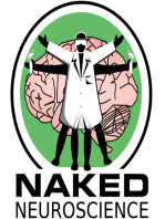The Naked Scientists unravel the connections in your brain