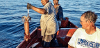 Team Cracks Mystery Of Missing Jumbo Squid