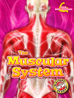 Muscular System, The