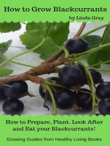 How to Grow Blackcurrants: Growing Guides