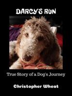 Darcy's Run