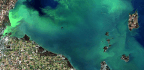 What Are Algae Blooms And Why Are They Bad?