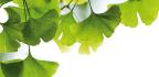 Ginkgo El Árbol Maravilloso