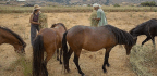 To Save Rare Ponies, One Couple Gives Up Almost Everything