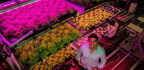 Many Have Tried And Failed To Make Vertical Indoor Farming Work. This Entrepreneur Thinks He Can Do It