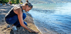 Lake Tahoe Shows Microplastics Aren't Just An Ocean Problem