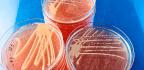 Superbug Mixes It Up To Beat 'Last Resort' Antibiotic