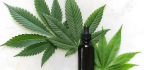 Five CBD-infused Products For Cannabidiol Newbies