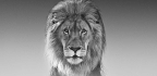 Interview David Yarrow