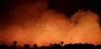 The Amazon Rainforest, Ablaze In Brazil