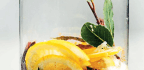 The Sweetness Of Lemons