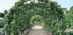 Fruit Trees In Training