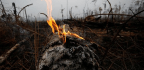 The Land Battle Behind the Fires in the Amazon
