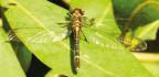 Swadini's new Dragonfly