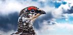 Smaller Brains Actually Benefit Some Birds