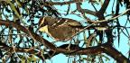 Bird Call 'Building Blocks' Mirror Human Language