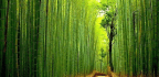 Pico Iyer On The Infinite Silences Of Japan