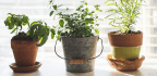 5 Indoor Garden Kits For Any Space