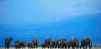 Why Botswana Is Lifting Its Ban On Elephant Trophy Hunting