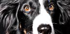 Genes Partially Explain Dog Breed Behaviors