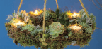 A Circle Of Succulents