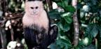 Monkeys Outdo Us In Flexible Thinking