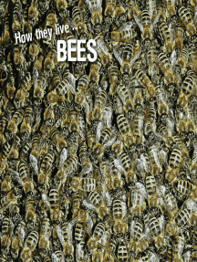 How they live... Bees: Learn All There Is to Know About These Animals!