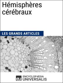 Hémisphères cérébraux: Les Grands Articles d'Universalis