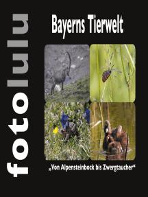 Bayerns Tierwelt: Von Alpensteinbock bis Zwergtaucher