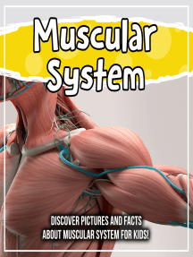 Muscular System: Discover Pictures and Facts About Muscular System For Kids!