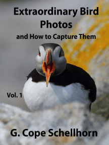 Extraordinary Bird Photos and How to Capture Them Vol. 1