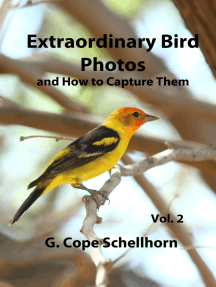 Extraordinary Bird Photos and How to Capture Them Vol. 2