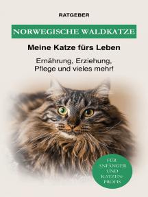 Norwegische Waldkatze: Ernährung, Erziehung, Pflege und vieles mehr über die Waldkatze!